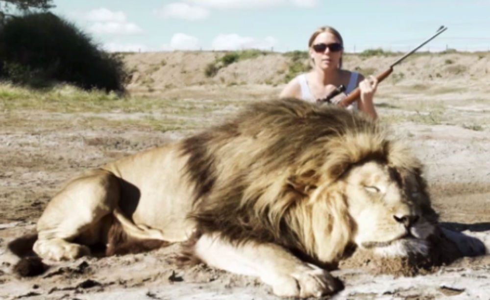 FACT CHECK: Did a Lion Take Revenge on a Trophy Hunter?