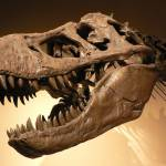 Paleontology Profile Picture